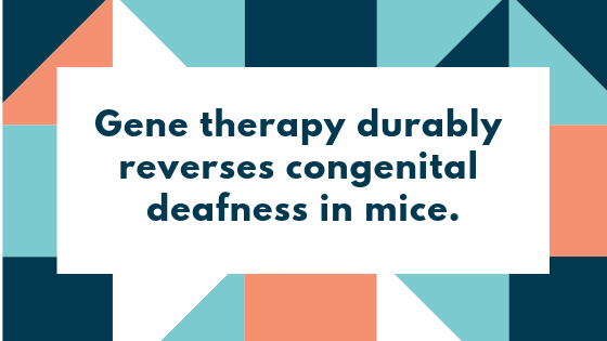 Gene therapy durably reverses congenital deafness in mice.