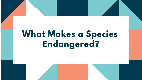 What Makes a Species Endangered?